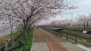 IMG_0671 須ヶ谷川桜づつみ