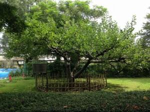 04ニュートンのリンゴの木